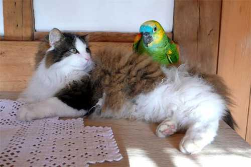 попугай заметил, что хозяин идёт домой и начал вытворять невообразимое